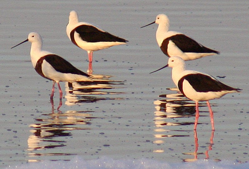 Banded Stilt wallpaper