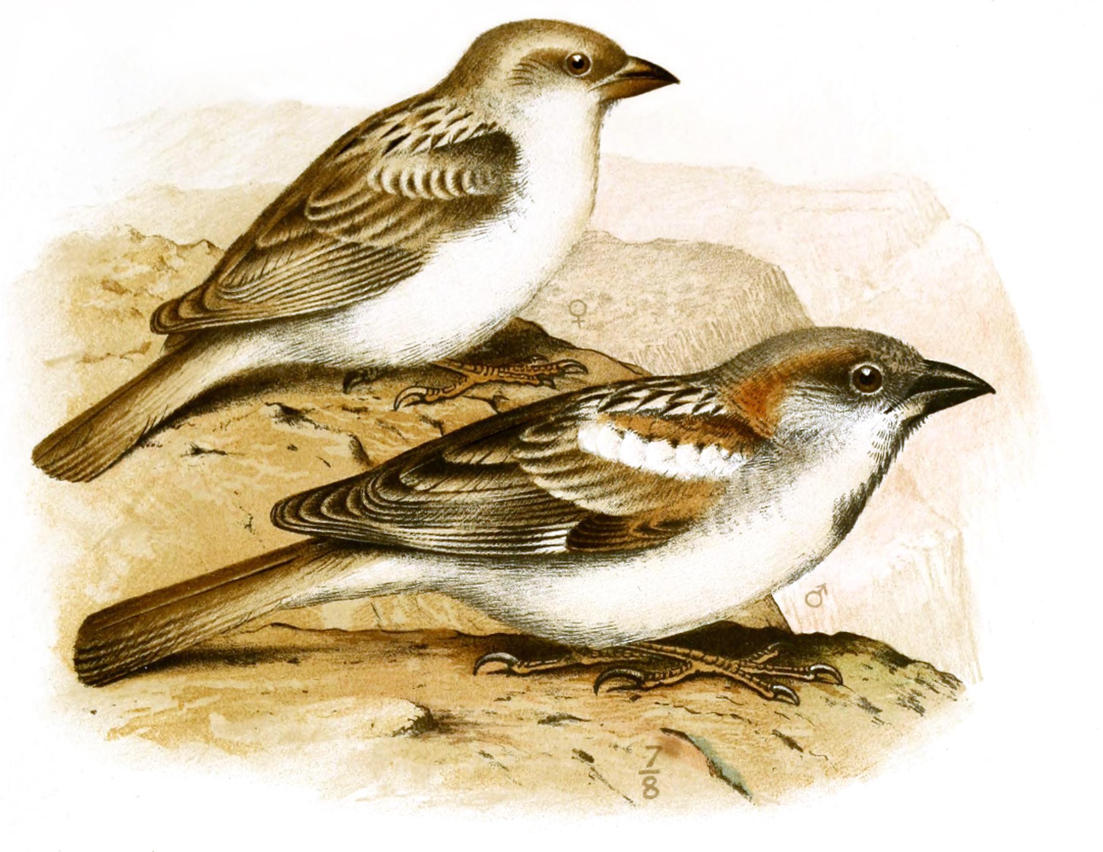 Abd al-Kuri Sparrow wallpaper