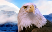 Baldeagle Mountain Wallpaper