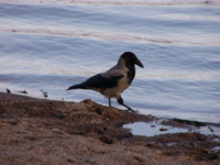 Birds Photos