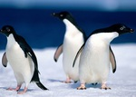 Disassembly penguins