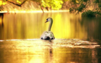 Golden Pond Wallpaper