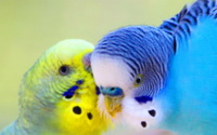 Lovely Parrots Wallpaper