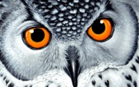Orangeeyes Owl Wallpaper