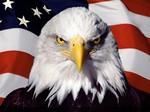 Severe Bald Eagle