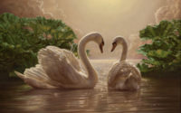 Two Swans Wallpaper