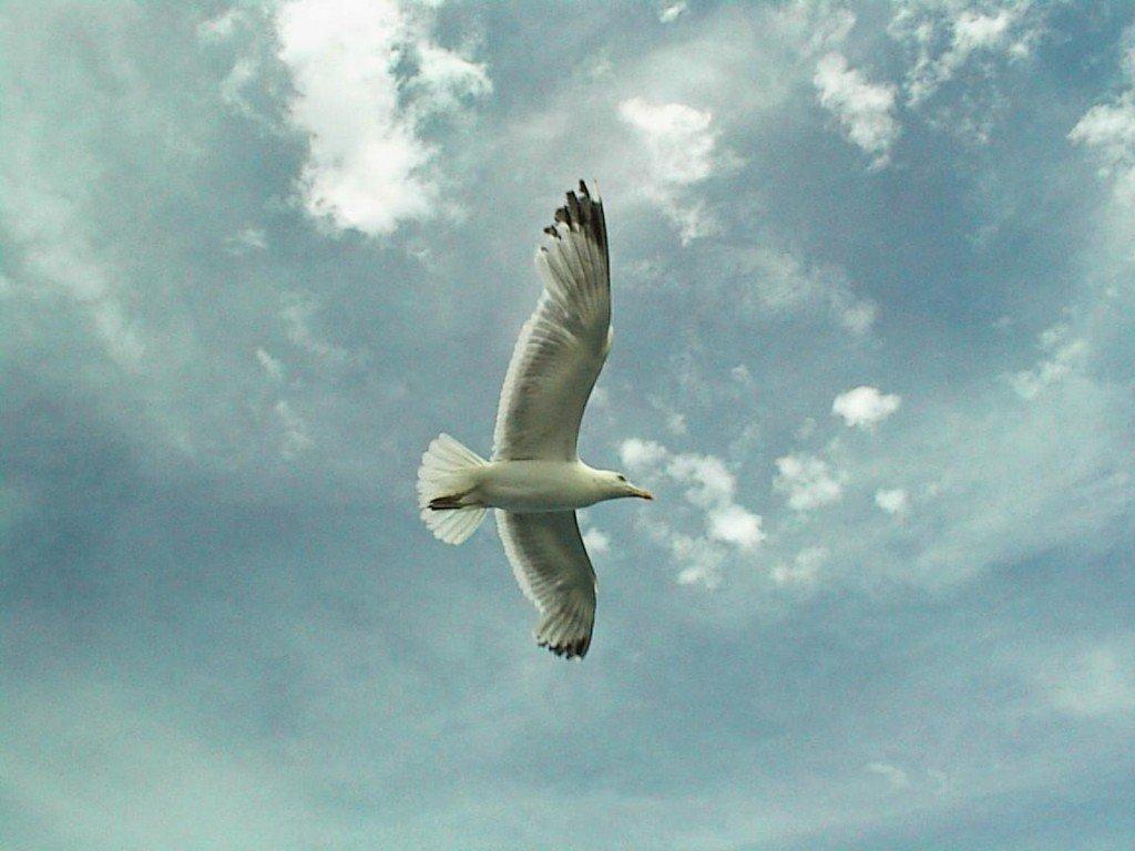 Beautiful Bird Photo