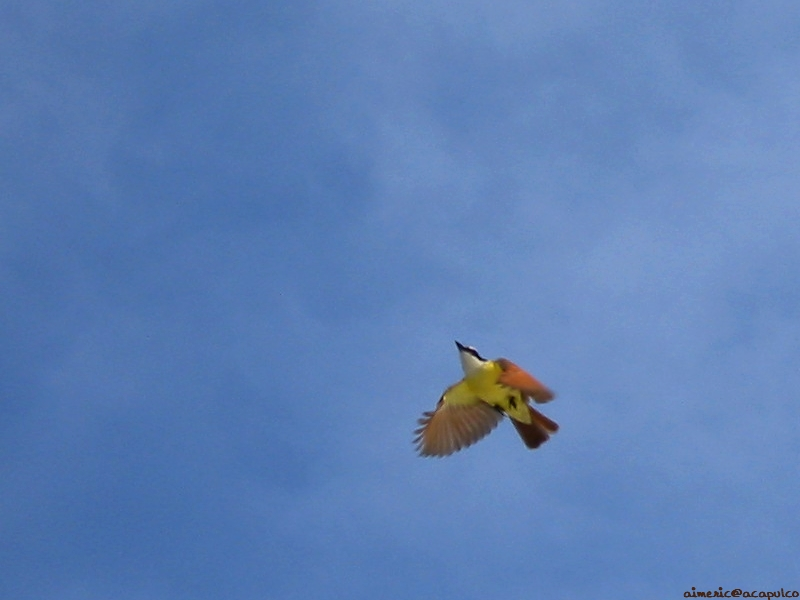 Bird Pic
