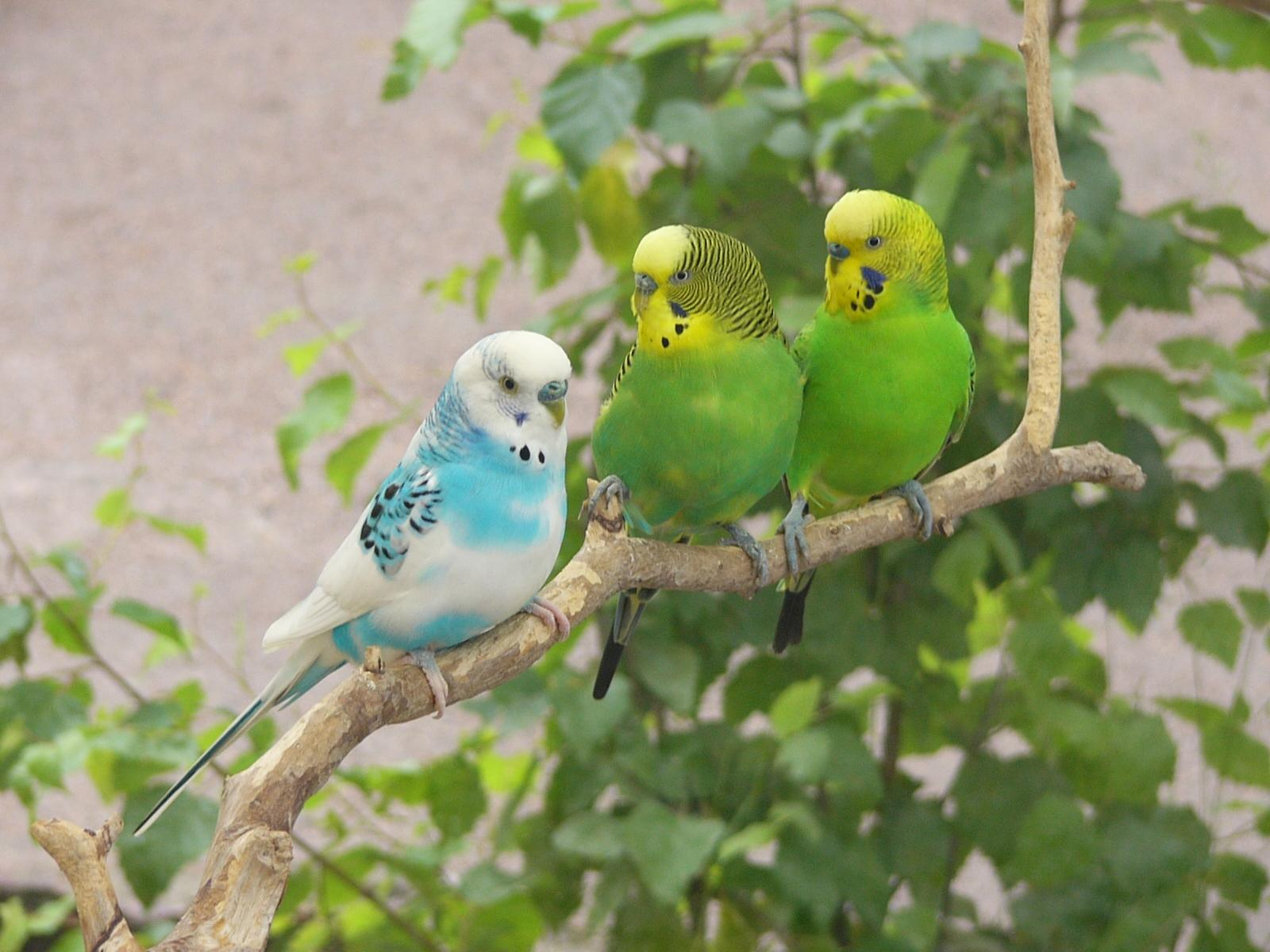 Birds Pic Photo And Wallpaper All Birds Pic Pictures
