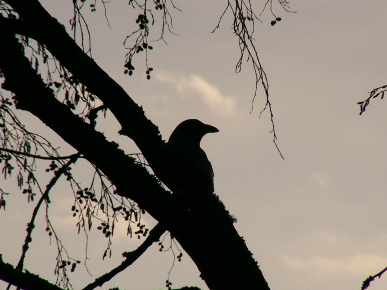 Birds Photos
