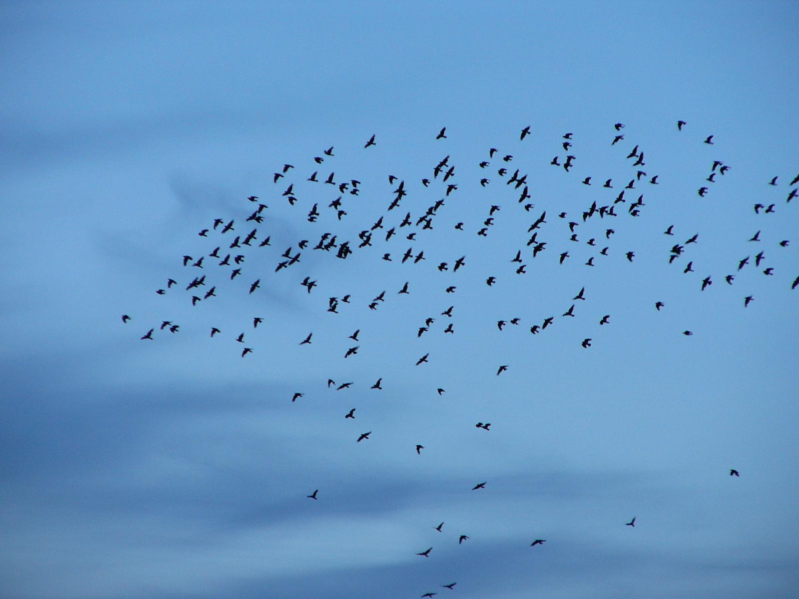 Birds Pic