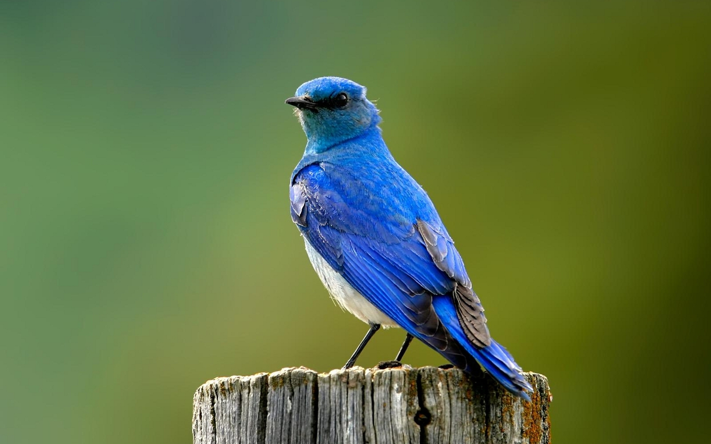 bluebird wallpaper photo and wallpaper all bluebird