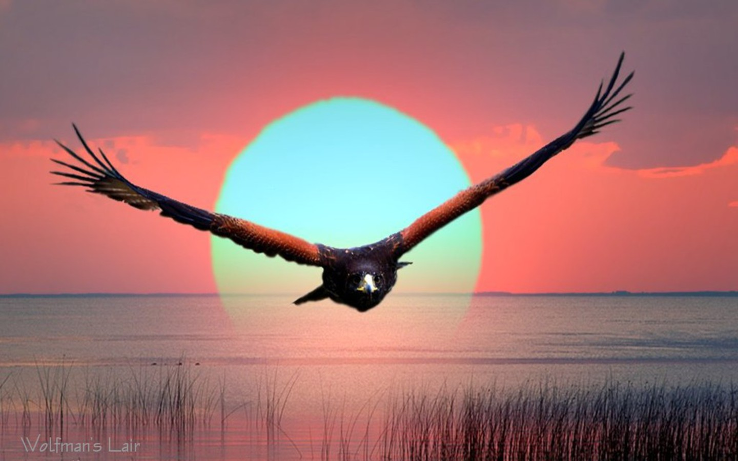 Eagle-sun Wallpaper
