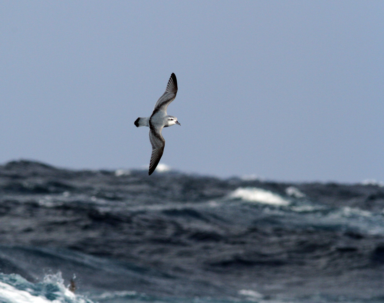 Flying Antarctic Prion