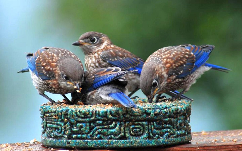 Four Littlebirds Wallpaper