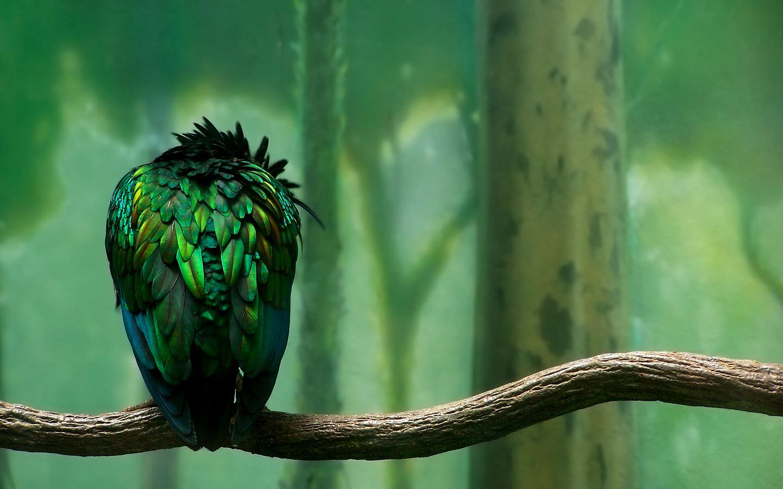 Green Bird Branch Wallpaper