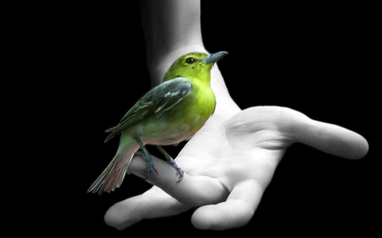 Greenbird Arm Wallpaper