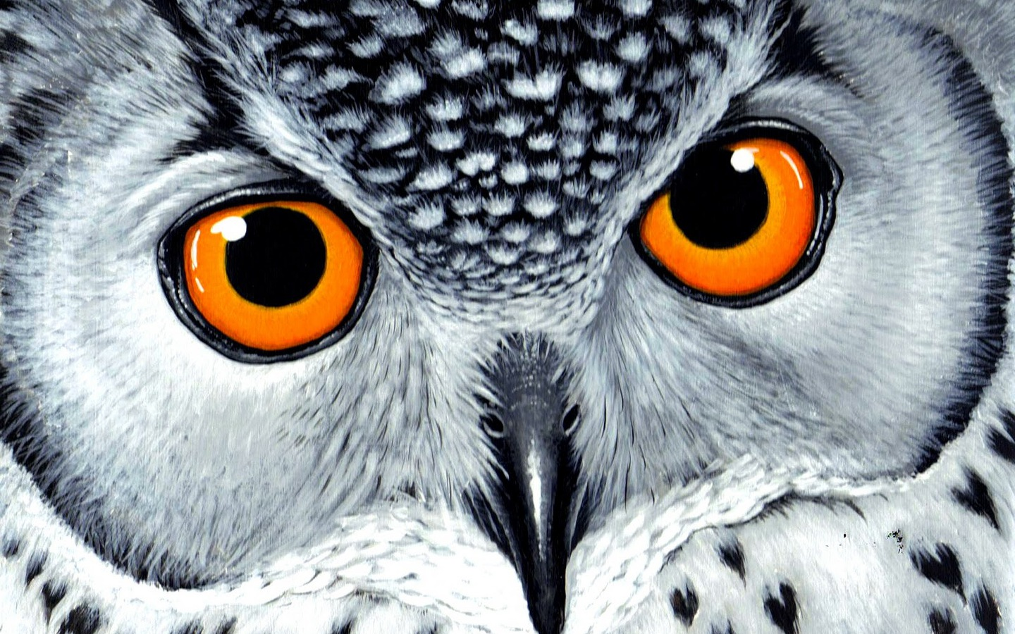orangeeyes owl wallpaper photo and wallpaper all